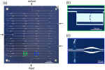 Observation of a Dissipative Phase Transition in a One-Dimensional Circuit QED Lattice